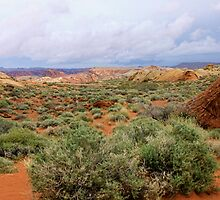 Valley of fire by Tammy  (Robison)Espino