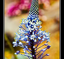 Blue cone flower  by XanthicAmber