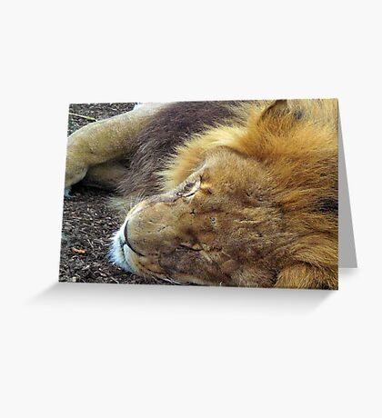 Lion - Wildlife Heritage Foundation  Greeting Card