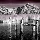 Pier Remains in IR - Strahan Tasmania by Hans Kawitzki