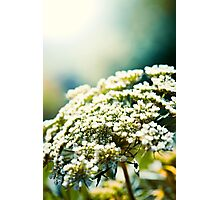 Small White Flowers Photographic Print