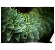 I shall call her Spiky and she will be mine and she shall be my Spiky Poster
