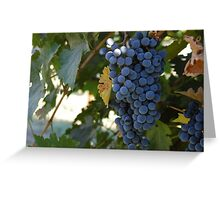 Wine Grapes Greeting Card