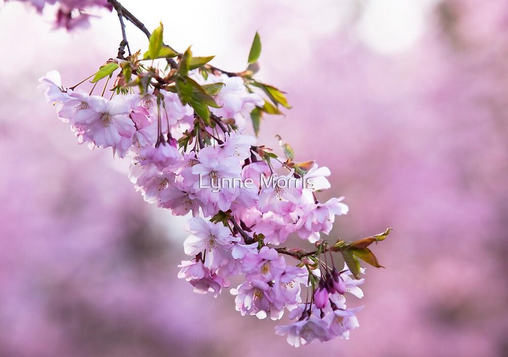 Spring Blush by Lynne Morris
