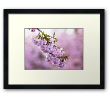 Spring Blush Framed Print