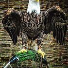 Bold Eagle by Simon Duckworth