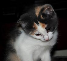 Cami, our newest family member by hanne