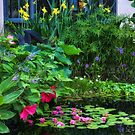 Water Garden by Margaret Barry