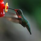 Hummingbird by ShootinMickey