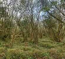 Burren Forest by John Quinn