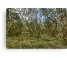 Burren Forest Canvas Print
