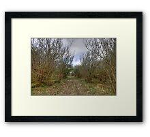 Burren Forest Path Framed Print