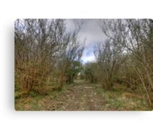 Burren Forest Path Canvas Print