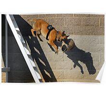 K9 Galt Police Dog Poster