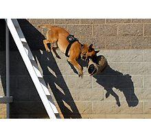 K9 Galt Police Dog Photographic Print