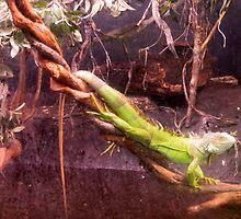 Iguana by ctheworld