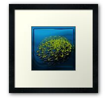 ©DA FS Flower On Water IAB. Framed Print