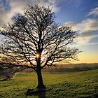 Lacken Tree Sunset by Hauke Steinberg