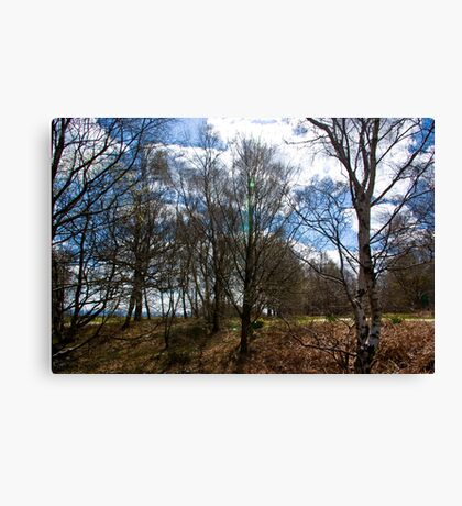 Trees #1 Canvas Print