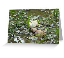 Crab Remains - Graeme Hall Nature Sanctuary, Barbaods Greeting Card