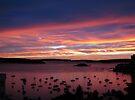 Early Morning, Elizabeth Bay by John Douglas