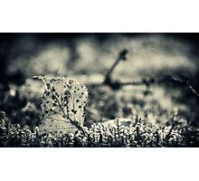 Standing Photographic Print