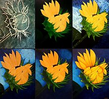 Evolution of a sunflower by Madalena Lobao-Tello