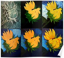 Evolution of a sunflower Poster