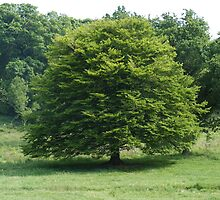 Tree,in all its glory. by Livvy Young