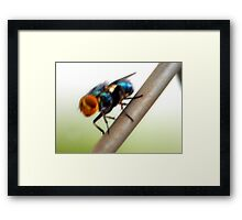 ©NS Blur Fly IA. Framed Print