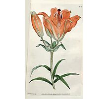 The Botanical magazine, or, Flower garden displayed by William Curtis V1 V2 1787 1789 0080 Lilium Bulbiferum, Orange Lilly Photographic Print