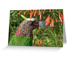 Hawk Headed Parrot 3 - Graeme Hall Nature Sanctuary, Barbados Greeting Card