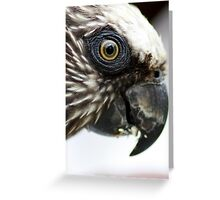 Hawk Headed Parrot 6 - Graeme Hall Nature Sanctuary, Barbados Greeting Card