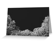 Silver Trees Greeting Card