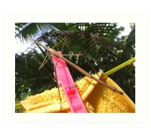 Hung Up Stick Insect  Art Print