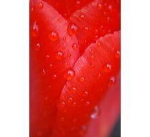 Rain Drops on Red Tulip  Photographic Print