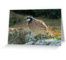 Quail - Graeme Hall Nature Sanctuary, Barbados Greeting Card