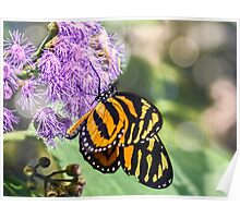 Monarch Butterfly. Poster