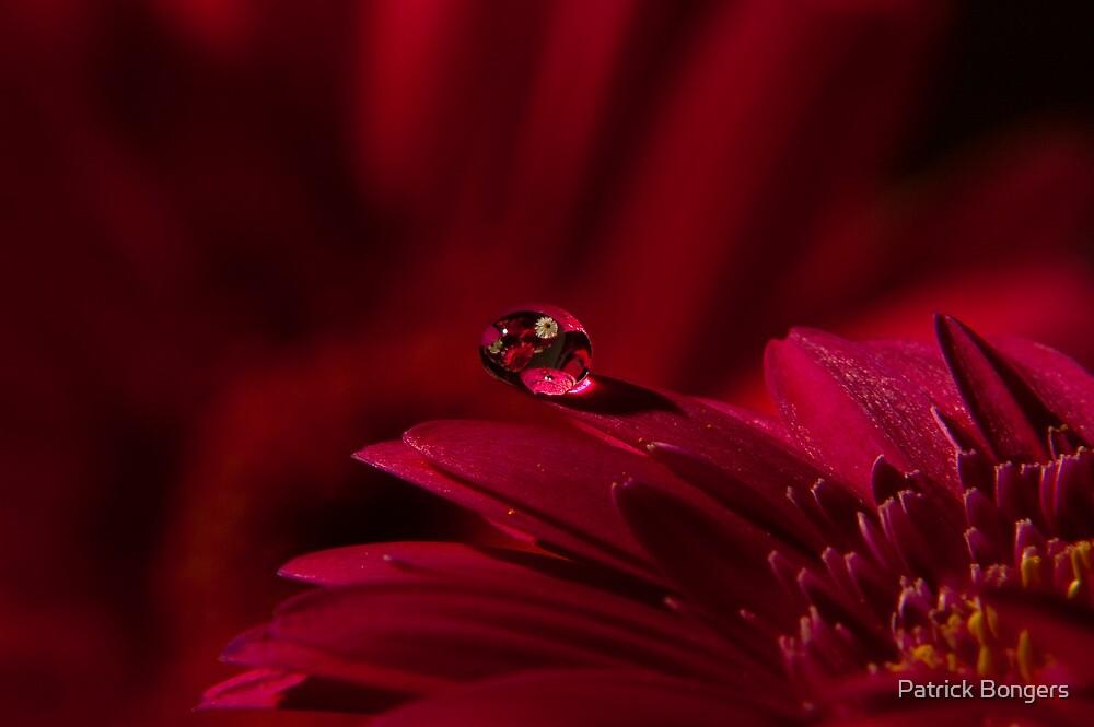Water Droplet Flowers by Patrick Bongers