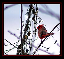 RED BEAK Photographic Print