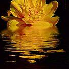 Tulip Reflections by Yannik Hay