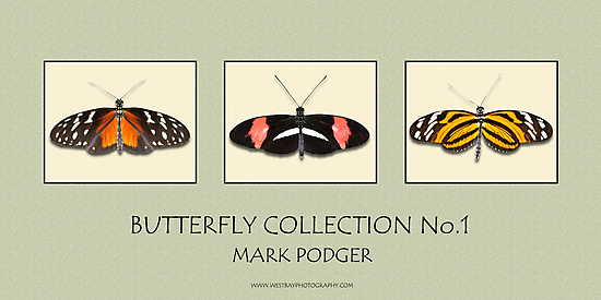 Butterfly Horizontal Collection 1 - Print by Mark Podger