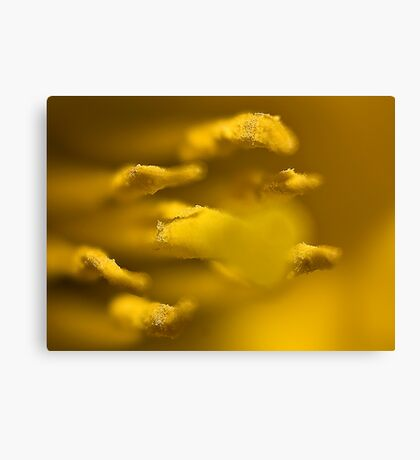 Inside the Trumpet (Daffodill) Canvas Print