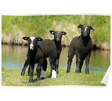 Ba Ba Black Sheep Poster