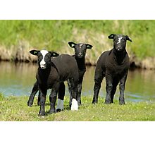Ba Ba Black Sheep Photographic Print