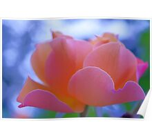 lovely pink rose flower photo art. Poster
