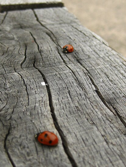 ladybird outing by millymuso