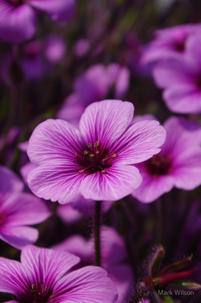Proud Pink Flower by Mark Wilson