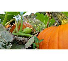The Pumpkin King Photographic Print