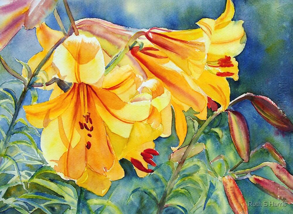 Cathedral Gold by Ruth S Harris